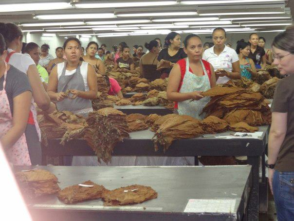 Honduran locals sort through tobacco leaves. Photo Courtesy of Brittany Castillo.